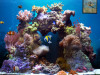 Amazing 3D Aquarium - Screensaver & Desktop Theme